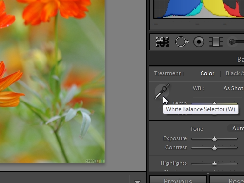 Choose the White Balance Selector tool