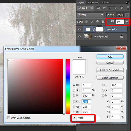adjusting the solid color layer