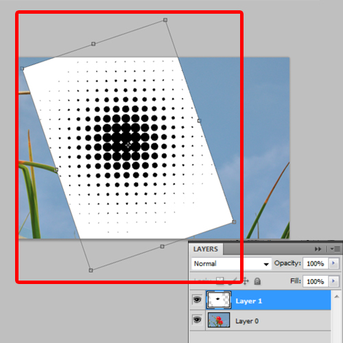 position the color halftone layer on the image