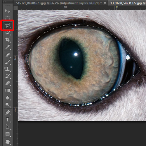 cropping out cat eyes